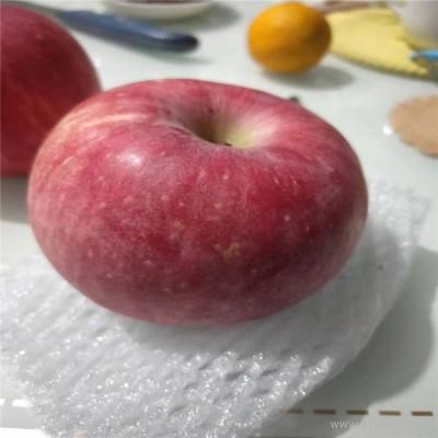 美华农业 苹果苗  嘎啦苹果苗 量大优惠 嘎啦苹果苗价格