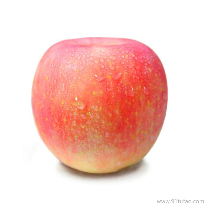 嘎啦苹果苗 嘎啦苹果苗批发价格 嘎啦苹果苗基地 易栽种