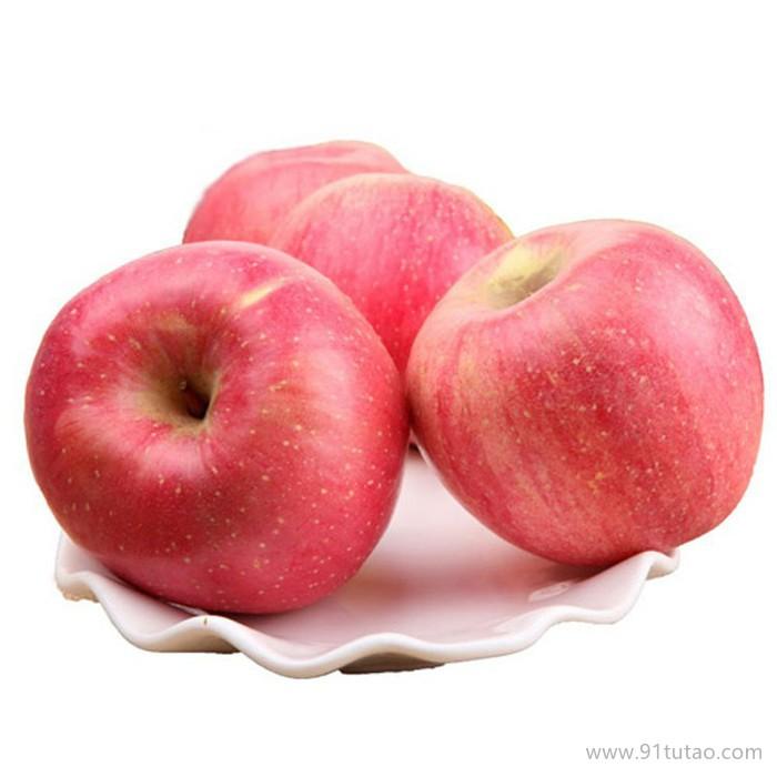 苹果苗 热销 高成活率嘎啦苹果苗 3年分枝嘎啦树苗果树苗批发