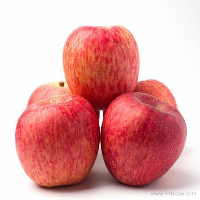 易管理 苹果苗 嘎啦苹果苗 烟台嘎啦苹果苗 易栽种 成活率高