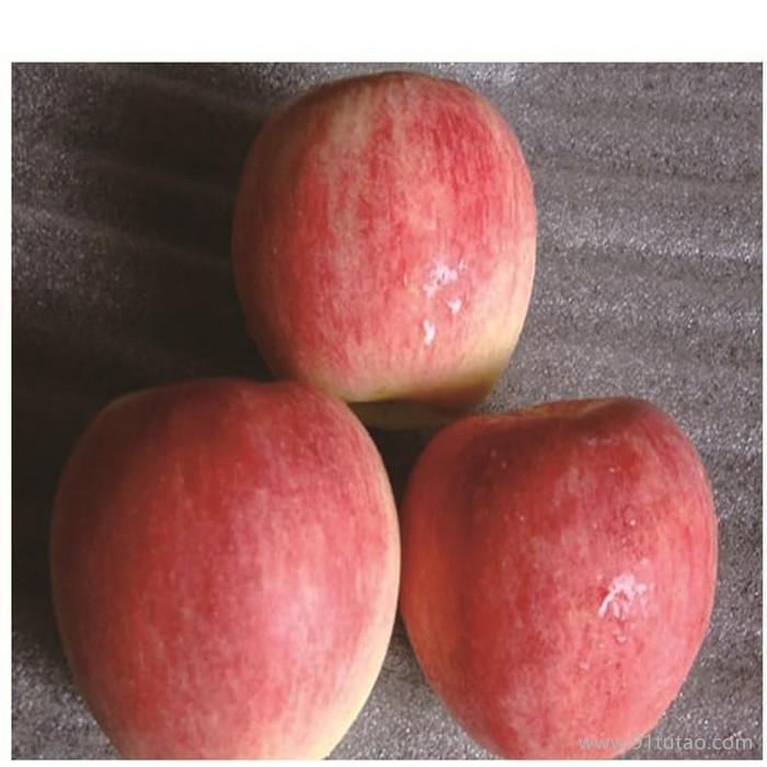 嘎啦苹果苗 嘎啦苹果苗价格 优质嘎啦苹果苗 欢迎选购