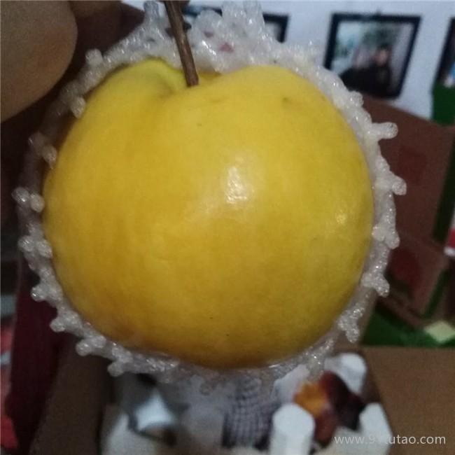 岱宗 桃子苗直售水果树苗嫁接山桃子苗 南北方种植果树苗 质优价廉  基地直销  欢迎选购