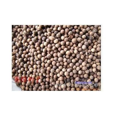 香樟种子:大叶香樟种子,小叶香樟种子等
