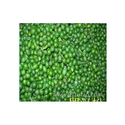 批发龙柏种子,侧柏种子,黑松种子,罗汉松种子等