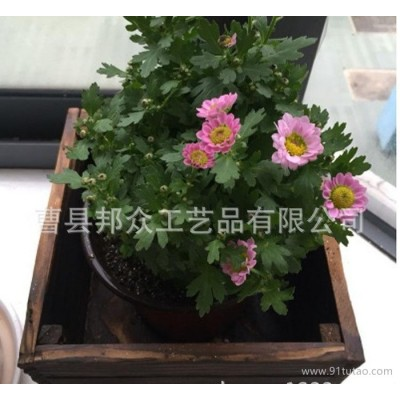 商家复古木质多肉花盆 桌面摆件碳化防腐实木花盆
