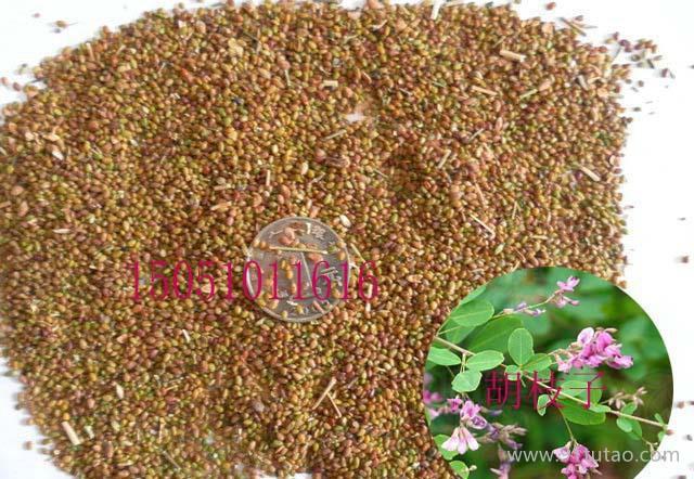 新采收林木种子 胡枝子种子 帚条种子保证发芽率 可货到付款