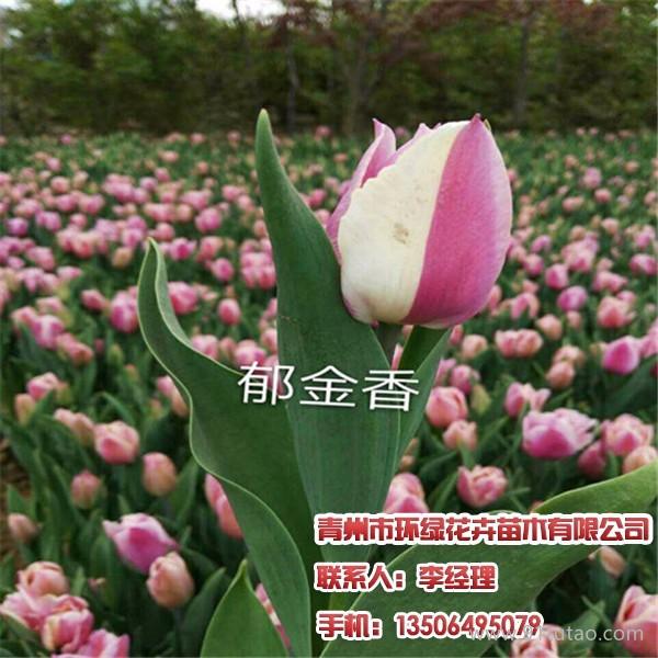 青州蔷薇,金叶莸,请找环绿花卉