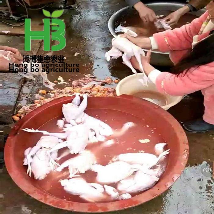 野鸡白条 鸿博野鸡白条出售 养殖场养殖野鸡白条冷冻包装山鸡