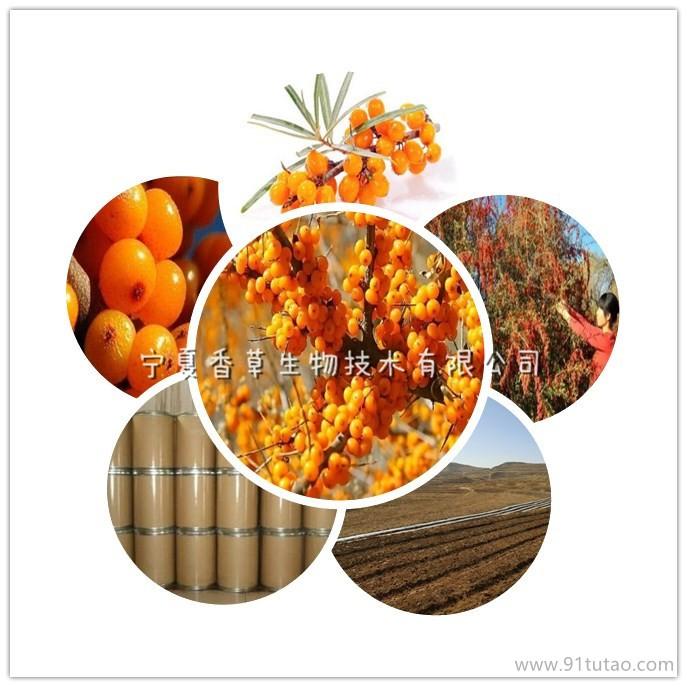 沙棘果提取物20:1 宁夏沙棘黄酮含量 沙棘浓缩粉现货