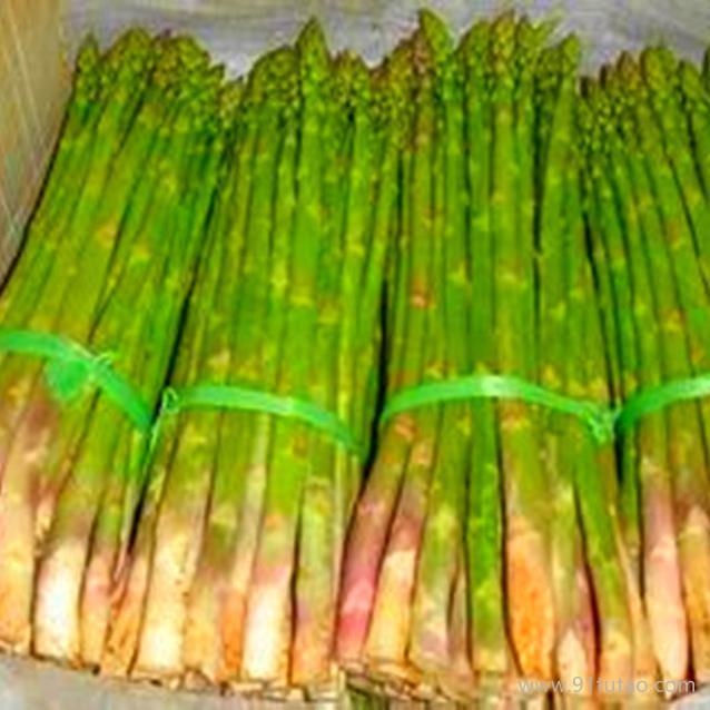 荷兰一号芦笋种子批发 优质芦笋种子.种苗