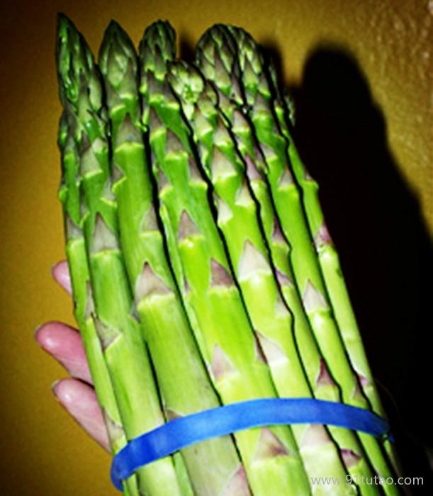 荷兰一号进口芦笋种子批发 优质芦笋种子