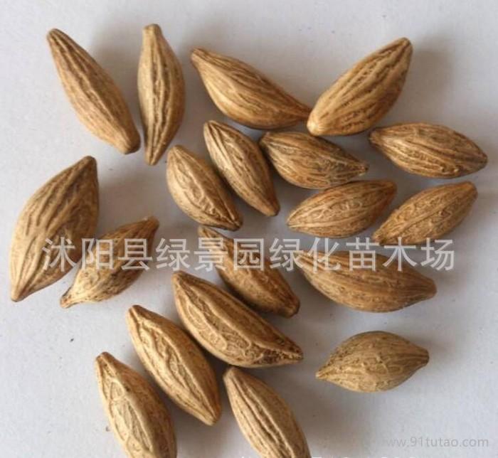 新采桂花种子 金桂种子 四季桂种子 丹桂种子 沉香桂 朱砂桂