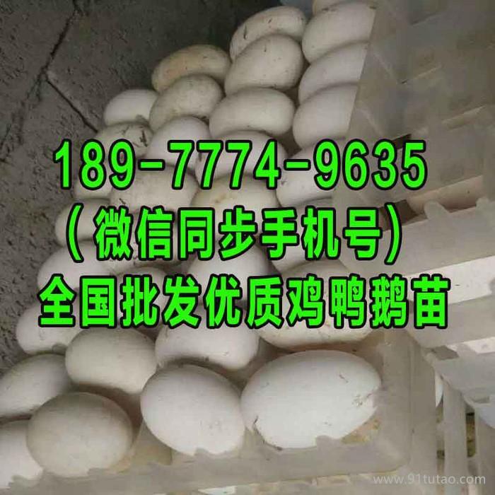 周口鹅苗批发市场地址 河池鹅苗孵化厂 2018至2019年猪价走势