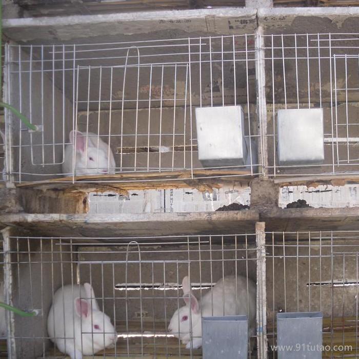 质保笼具  厂家直销 质优价廉子母兔笼 养殖 兔笼 可来样定做兔笼 养殖笼 镀锌兔笼