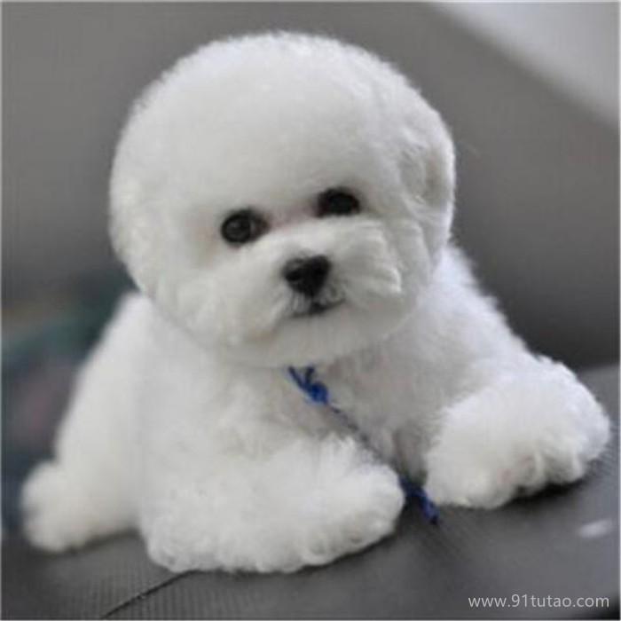 恒发 小犬宠物犬活体出售 小犬宠物犬活体出售 宠物 品质保障 价格面议