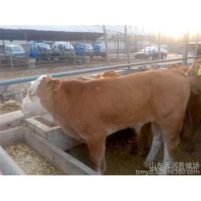 中国肉牛网 中国牛苗网 中国优质牛网 中国牛犊网
