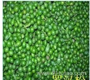 500公斤小叶罗汉松种子,日本罗汉松种子,罗汉松,绿色果球