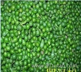 批发罗汉松种子,黑松种子,华山松种子,柏树种子,落叶松种子等