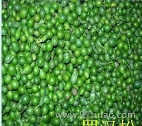 批发罗汉松种子,小叶罗汉松种子,台湾罗汉松种子等