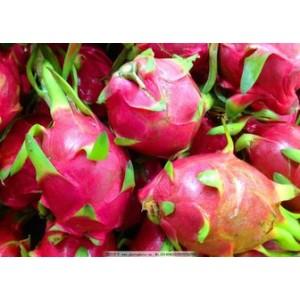求购火龙果,雪莲果,芒果,柠檬,圣女果,红枣,猕猴桃,黄桃