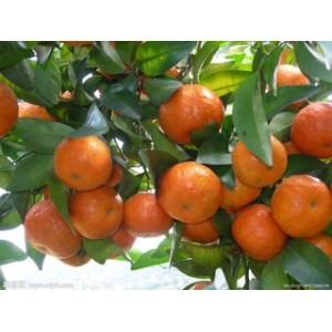 求购苹果.梨.芒果.石榴;猕猴桃.蜜桔.脐橙.柚子.柠檬