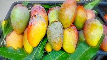 求购芒果. 枸杞子. 猕猴桃、柿饼. 蜜桔、脐橙、柚子、柠檬