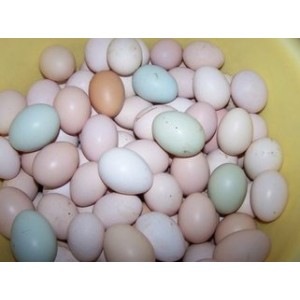 求购土鸡蛋,咸鸭蛋,鹅蛋,松花蛋,变蛋,五香蛋