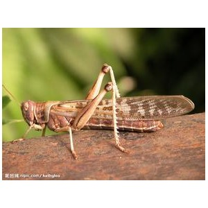 求购蝗虫.蝎子.大麦虫.黄粉虫.蜂蜜