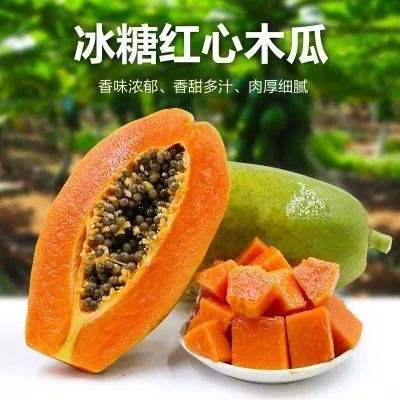雷州冰糖木瓜 广东特产当季青皮红心牛奶木瓜3-4个装 新鲜水果现摘