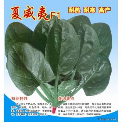 夏威夷F1菠菜种子