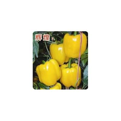 大果黄园椒