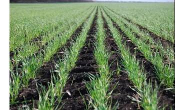 过了雨水,冬小麦进入返青拔节孕穗期,这些管理措施一定要做好!